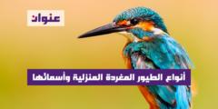 أنواع الطيور المغردة المنزلية وأسمائها