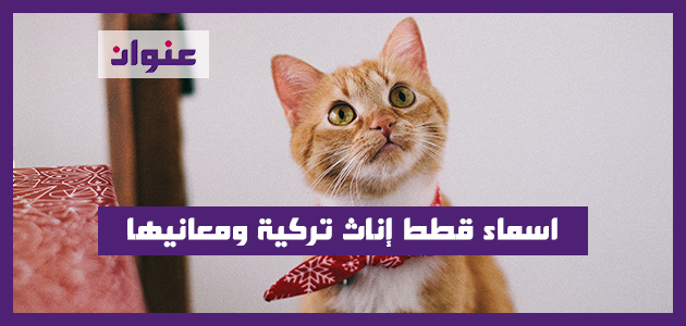 اسماء قطط إناث تركية ومعانيها