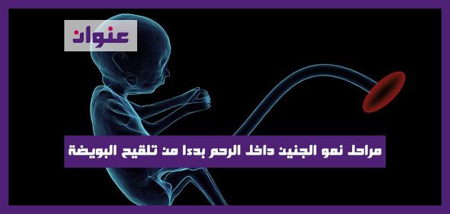 مراحل نمو الجنين داخل الرحم بدءا من تلقيح البويضة حتى المرحلة النهائية من الحمل