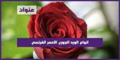 انواع الورد الجوري الاحمر الفرنسي