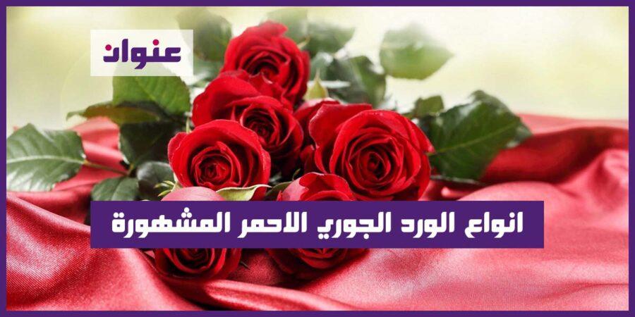 انواع الورد الجوري الاحمر المشهورة