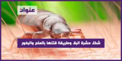 شكل حشرة البق وطريقة قتلها بالملح والبخور
