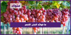 ما فوائد العنب الاحمر