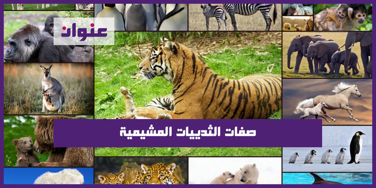 صفات الثدييات المشيمية