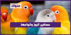 عصافير الروز وانواعها